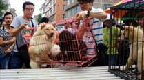 Dog meat festival held in China despite mounting protests