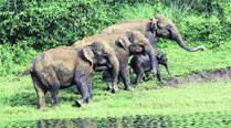Woman trampled to death while posing for a photo with an elephant inKerala