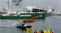 IB to govt: Cancel Greenpeace India's FCRA registration