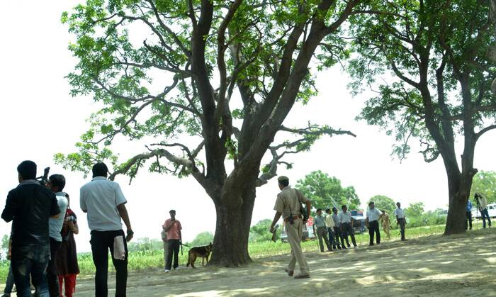The postmortem report of the two girls confirmed that they were raped before murder.<br />A police dog stands near the tree where two teenage girls were found hanging after they were gang raped in Katra village in Uttar Pradesh. (Source: AP)