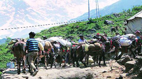 Mules line up at Lincholi. (Tashi Tobgyal)