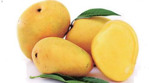 Pune: King of mangoes all set to make its way to unchartered territories
