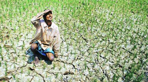 Summer sowing tumbled nearly 48% and seasonal monsoon showers trailed the benchmark average by 42% until Friday.