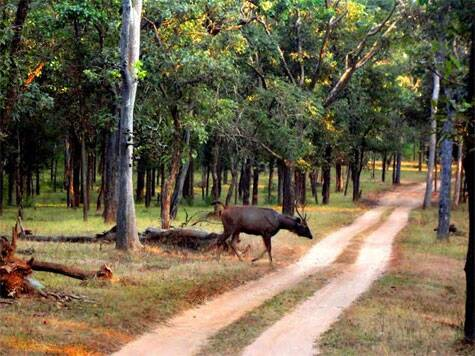 Pench Jungle, the landscape where Rudyard Kipling's Jungle Book is believed to be based in Seoni, district, M.P. Source: Swasti Pachauri