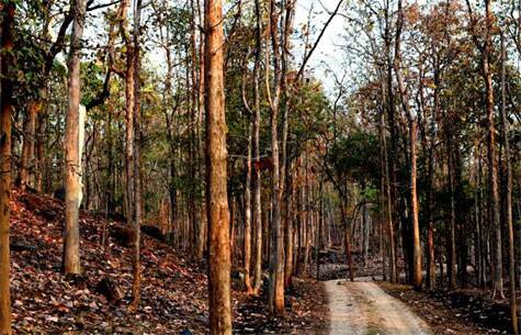 Inside Pench. On a safari | Source: Swasti Pachauri