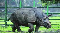 Rhino Shiva loses fight to cancer, dies in Delhi zoo