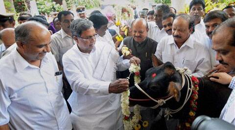 Karnataka Chief Minister Siddaramaiah garlands a cow at an event to mark World Milk Day in Bengaluru on Monday. (Source: PTI)