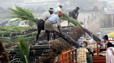 Mills cannot function sustainably unless sugarcane prices, which are state controlled, are aligned with the price of sugar. (Source: PTI)