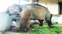 Sunder not ready to board truck, given rest for three days