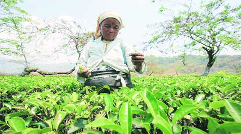 At least seven tea gardens  are lying closed in the Dooars, a UTUC leader said