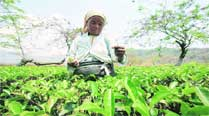 Food minister visits closed tea garden