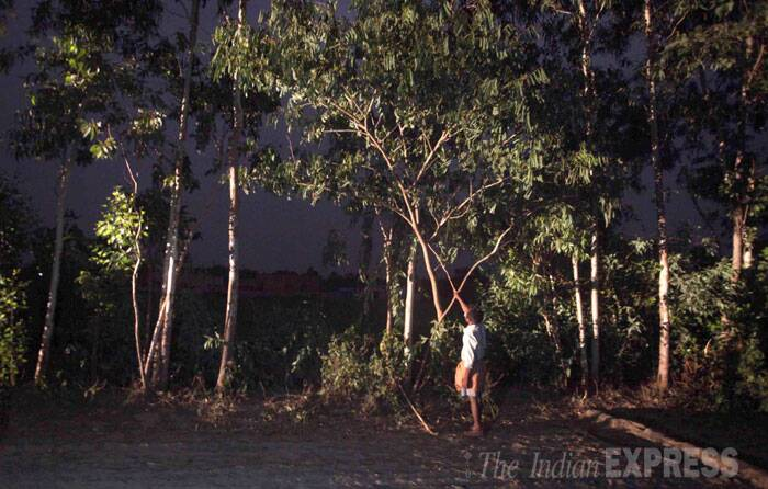 A villager points to the tree where the victim was found hanging. (Source: Express photo by Oinam Anand)