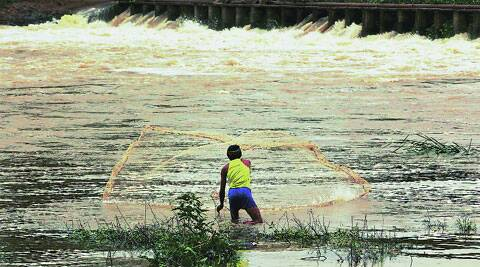 A fisherman throws his net in a roaring Indrayani river at Alandi. (Source: IE photo by Sandeep Daundkar)
