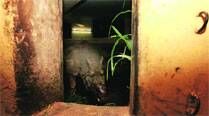 After Shiva, Delhi zoo opens gates for rhino fromKanpur