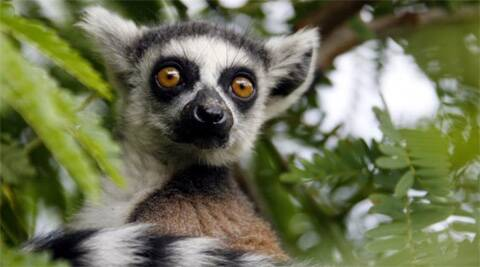Madagascar's ecological challenge parallels the Middle East's political one.  Source: Reuters