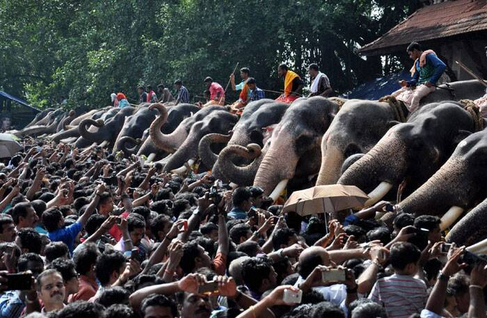 Devotees feeding Elephants (Anayoottu) at the Vadakkunnathan Temple in Thrissur, Kerala in connection with the opening of Malayalam month Karkkidakam on Thursday. (Source: PTI)