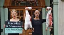 India bans import of foie gras, activists urge US to followsuit