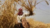 India loses up to 2 million tonnes of foodgrain production due to waterlogging: Govt