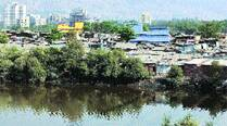 Thane, Vasai creeks on wildlife body list for conservation