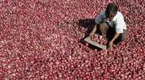 Hands tied, knee jerk: Stock limits put on onion, potato