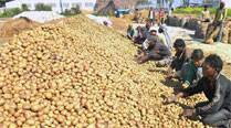 Didi bans potato export to states, smuggling to Pak