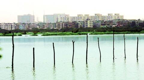 Row of buildings seen from the Okhla Bird Sanctuary. (Express photo)