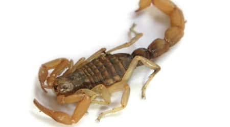 scorpio-main