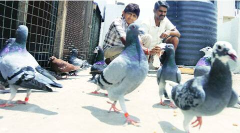 The birds are priced at Rs 10,000 to Rs 50,000 each. ( Source: Express photo by Arul Horizon )