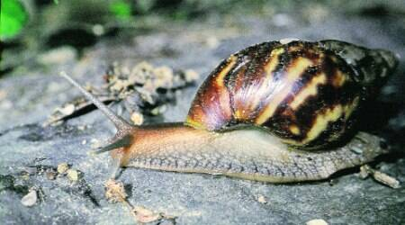 Snails can seal themselves up retaining the moisture inside their bodies for three years