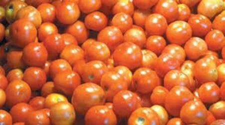 The tomato prices are still ruling at Rs 56 per kg as supplies continue to remain under stress.