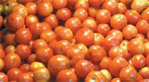 Tomato prices remain high at Rs 80/kg