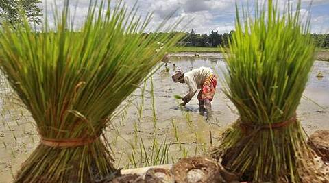 A labourer plants saplings in a paddy field on the outskirts of Agartala, India has asserted that the WTO trade pact could not be a done deal till it saw progress on the food security issue.  (Reuters)