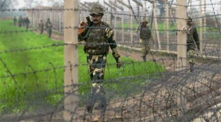 Chasing cattle keeps BSF busy on Indo-Bangla border