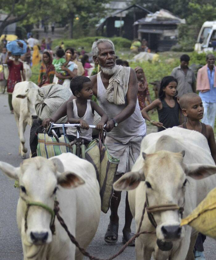 Villagers living along the Kosi River close to the Nepal border walk with their cattle as they move to safer places at Birpur in Supaul. (Source: AP)