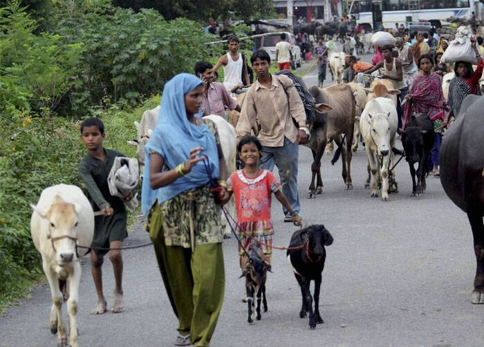 Flood affected villagers are seen moving with their cattle to relief camps near Indo- Nepal border at Birpur due to danger of flood in Kosi river after heavy inflow of water. (Source: PTI)