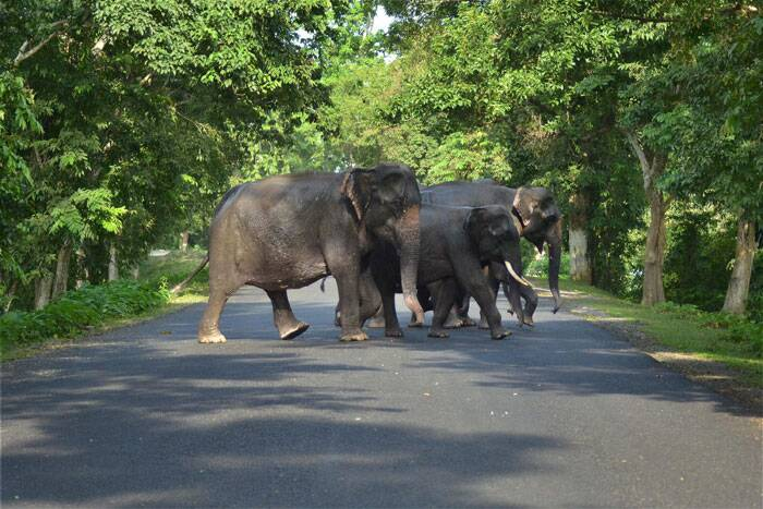 An elephant herd crosses a highway after floods hit Kaziranga National Park in Assam on Tuesday. (Source: PTI Photo)