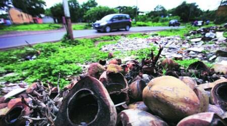 Stagnant water in discarded coconut shells can become a breeding ground for dengue-causing mosquitoes. (Source: Express photo by 	Arul Horizon)