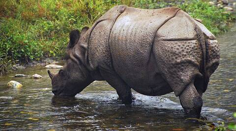The last incident of rhino poaching was recorded in the Jaldapara National Park in 2010.