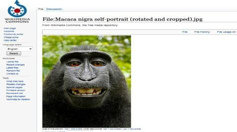Monkey selfie on WikiMedia