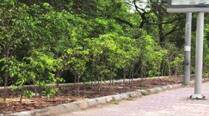 Pune University NSS students to plant trees in hilly regions to avert landslides
