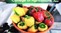 After a high, exotic vegetables fail to take off in Pune