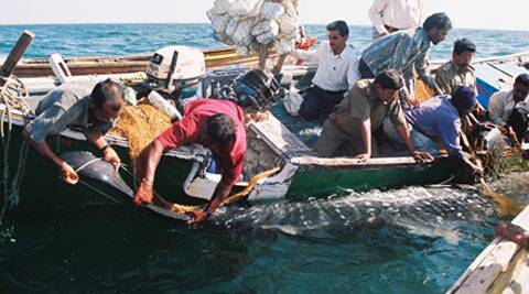 Whale shark rescue in progress off the coast of Gujarat.