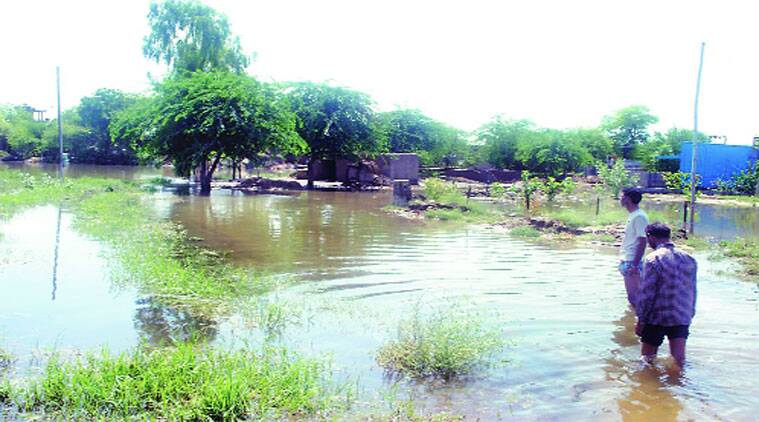 The water-logged Shama Khanka village in Abohar on Wednesday. (Source: Express photo)