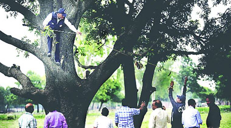 "According to the SIT, the branches of the mango tree were around 8-10ft high, and the ""manner of hanging"" did not suggest suicide."