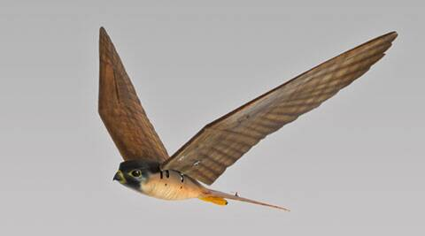 Robotic birds look and fly exactly like the real creatures and act as a deterrent to flocks of nuisance birds.