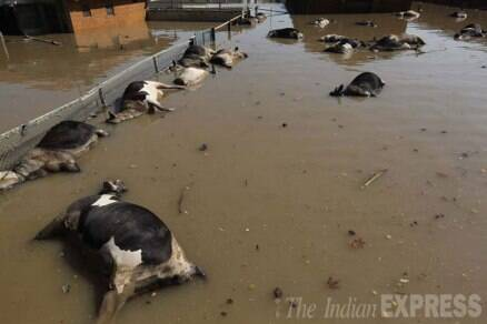 Photos j amp k floods aftermath deluge of relief camps the indian