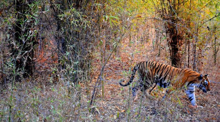 In nature's lap: A glimpse at Kanha National Park