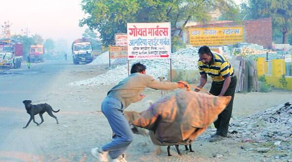 This is how they catch and sterilise dogs in Rajasthan.