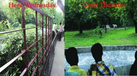 Gone in 24 hours: The mystery of the vanishing fence at DelhiZoo