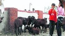 Caught on camera: Group carrying calves clashes with cops